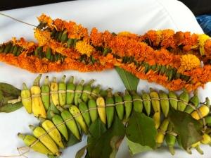 نوعين من النباتات العطرية، زهور القرنفل البرتقالية وفل عزان